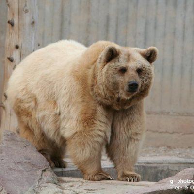Die Bärenstrategie von Lothar Seiwert