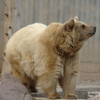 Arbeitstypen der Bärenstrategie